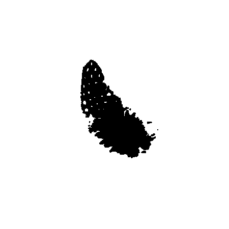 black feather